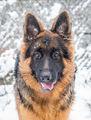Аякс се радва на зимата ; comments:53