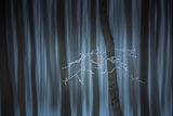 Приказна гора ; comments:43