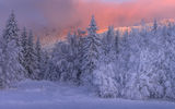 Зимно привечер ; comments:8