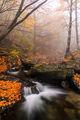 В прегръдките на есента ; comments:9