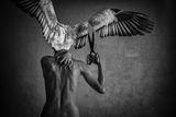Подрязване на крилата ; comments:8