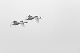 Летят ли двама ; comments:6