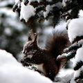 В снега ; comments:25