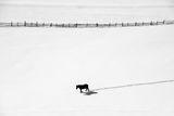 Зимна разходка ; comments:14