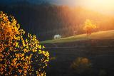 Спомен за светлината, докосната от есента.... ; comments:10