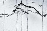 Зимна графика - Родопа планина ; comments:2