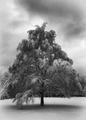 Зима в Южния парк на София. ; comments:5