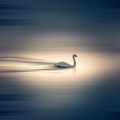 Swan lake ; comments:6