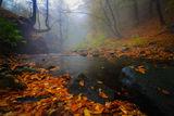 ''Есенни багри в омагьосаната гора'' ; comments:37