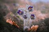 Желание за пролет ; comments:28