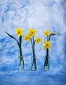 Пролетен етюд ; comments:14