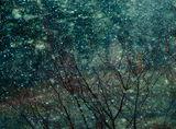 Когато вали сняг ; comments:7