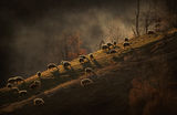В края на деня някъде там в Родопа планина... ; comments:72