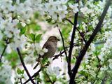 Пролетно... :) ; comments:19