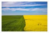В цветовете на май ; comments:12