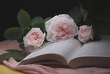 Натюрморт - книга и рози ; comments:9