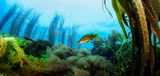 Подводен пейзаж ; comments:6