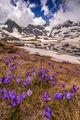 Пролетни динамики ; comments:9