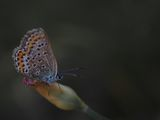 no name ( ID=2367035 ) ; comments:23