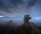 Дървото на Рожен ; comments:11