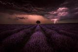 Буря с лавандули ; comments:23