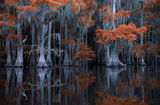 Mystery of the Swamp ; comments:59