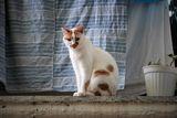 просто котка ; comments:4