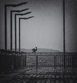 Сам в дъжда ; comments:49