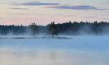 Мъглива сутрин ; comments:19
