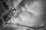 В джунглата на Камарине Сур ; comments:8