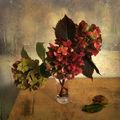 Есенни хортензии 3 ; comments:38