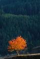 Сигнално есенно ; comments:11