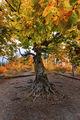 Есенно дърво ; comments:2